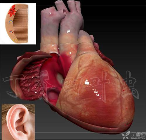 3d动画图解心脏大体 解剖 (医学专业必收藏)-超声解剖彩色图谱 超声